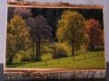 Bild auf Birkenholz