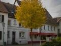 Plettenberg 232