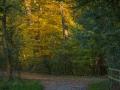 Herbst 115