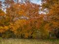 Herbst 132