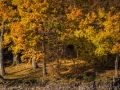Herbst 31