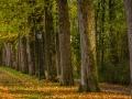 Herbst 63
