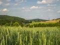 Landschaft 46