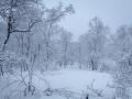 Winter 57