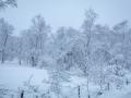Winter 58