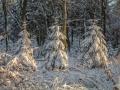 Winter 76