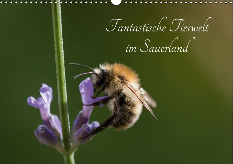 Fantastische Tierwelt im Sauerland Kalender 2018